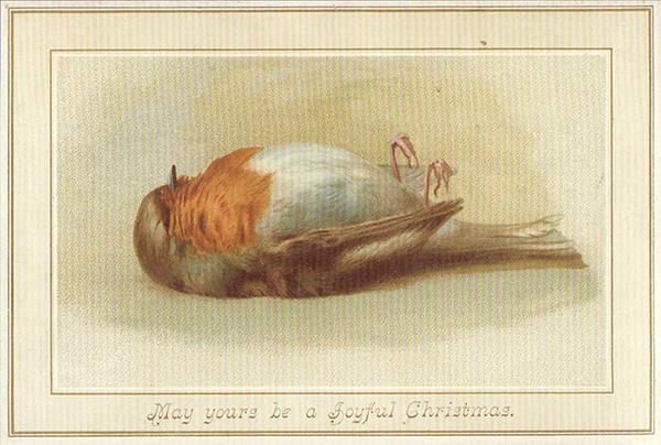 Joulukortissa kuollut punarinta
